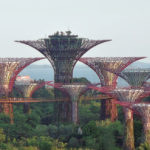 "man made ""super trees"" rising above canopy of real trees"